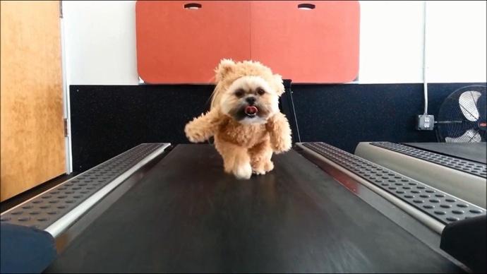 我是一只泰迪熊,天不怕,地不怕,斗恶魔,嘿吼