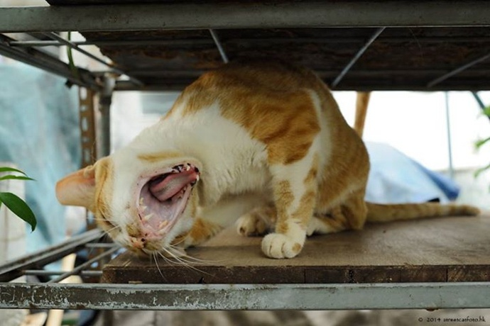 怎么把街边的小猫拍的很有故事感?《捕猫捉影》拍猫心得分享!