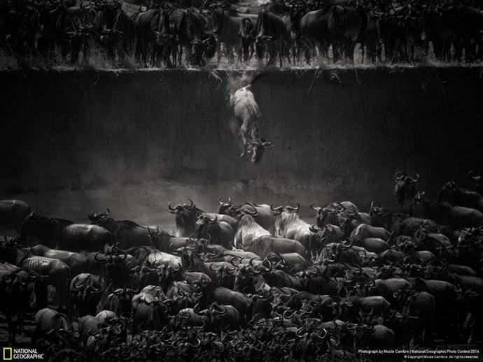 国家地理摄影比赛 2014 得奖作品赏