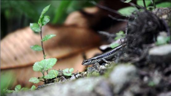 行走在雪山中的丛林里 ——使用佳能C300拍摄TBIS 考察视频