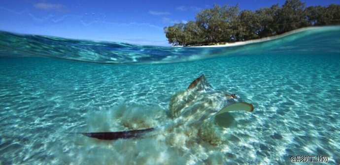 酷暑难耐,感受绝美海底世界的无限清凉!