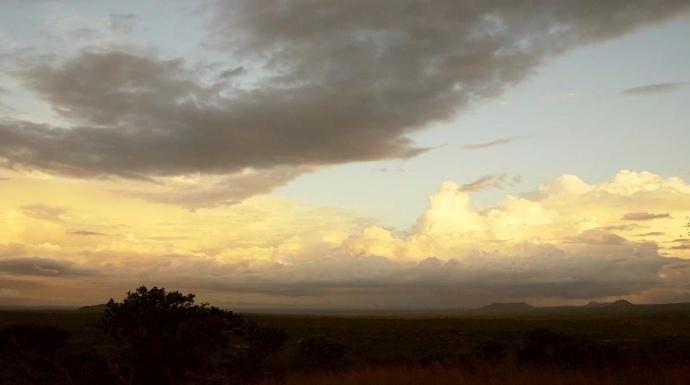 来自南非草原最壮丽的呼唤