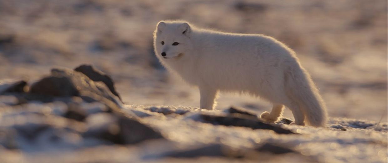 我在北极拍纪录片!极寒之地拍摄攻略