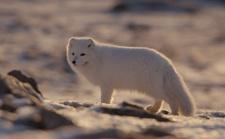 案例 | 我在北极拍纪录片!极寒之地拍摄攻略