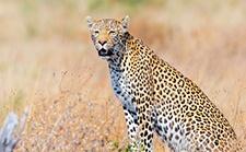 案例 | 延时拍摄非洲野生动物迁徙,令人耳目一新的视角