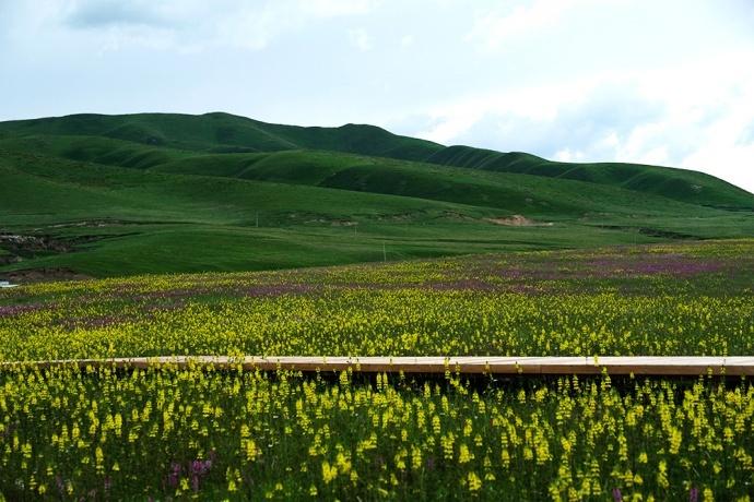 中国首部8K HDR电影的甘南拍摄之旅 ——拉卜楞寺&九色花溪