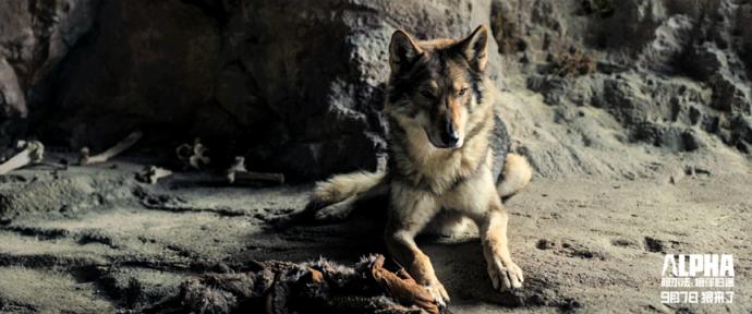 友情与美景相伴,《阿尔法:狼伴归途》与你同行