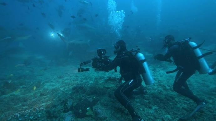SHOT ON GEMINI :拍过几十种鲨鱼,Sean Ruggeri 告诉你怎么拍