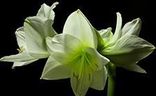 花了3年时间,8T素材,就是为了延时记录这些美丽的花朵盛开