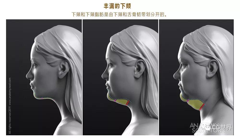 学CG怎么可以少了这套面部解剖图?想要来拿~